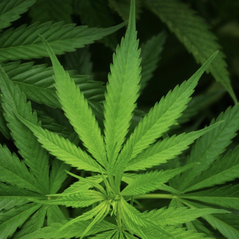 Legalization of Marijuana: Two Viewpoints from Local Law Enforcement