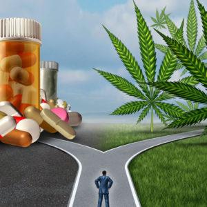 Medical Marijuana Saves Opioid Addicts