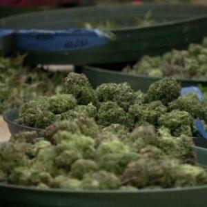 Ward County looking to update ordinance for medical marijuana